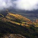 Cape Vert